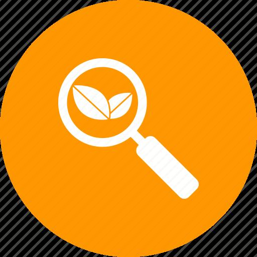 explore, find, internet, organic, search, system, web icon
