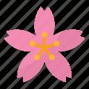 flower, garden, japanese, sakura, spring
