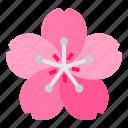 flower, japan, japaneses, sakura