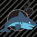animal, jugle, sea, shark, zoo