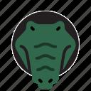 animals, crocodile, jugle, wildlife, zoo