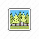 forest, trees, coniferous, pine, spruce, christmas