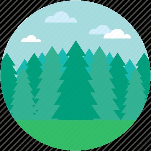 douglas fir, fir forest, fir tree, greenery, spruce forest icon