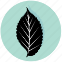 ecology, elm, floral, forest, garden, leaf, nature icon