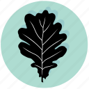 ecology, environment, forest, leaf, oak, plant, tree icon