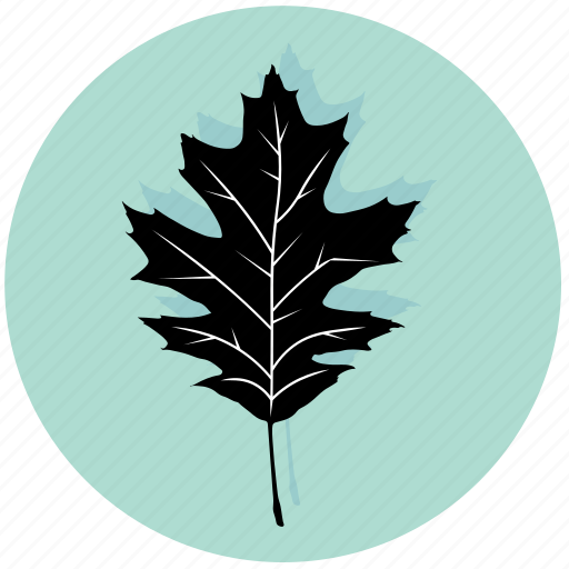 eco, forest, garden, leaf, maple, nature, plant icon