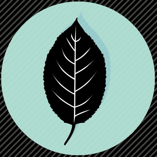cherry, eco, garden, leaf, nature, plant, tree icon