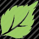 fruit leaf, green leaf, serrated leaf, strawberry leaf, toothed leaf icon