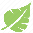 green leaf, leaf, leaf shape, leaf design, palm leaf