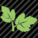 green leaf, hawthorn leaves, leaf, leaf design, leaf shape icon
