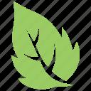 birch leaf, green leaf, leaf, serrated leaf, toothed leaf icon
