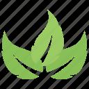 green leaves, leaf design, leaf logo, leaf shape, three leaves icon