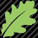 green leaf, leaf, leaf design, leaf shape, oak leaf icon