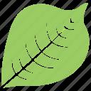 bird cherry leaf, green leaf, leaf, leaf design, leaf shape icon