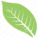 goat willow leaf, green leaf, leaf, leaf design, leaf shape icon