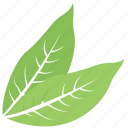 great sallow leaf, green leaf, leaf, leaf design, leaf shape icon