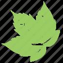 grapes leaf, green leaf, leaf design, leaf shape, vine leaf icon