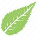 green leaf, leaf, serrated leaf, sour cherry leaf, toothed leaf icon