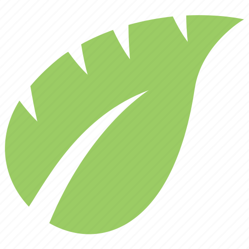 Green Leaf Leaf Leaf Design Monstera Leaf Tropical Leaf Icon Download On Iconfinder ✓ free for commercial use ✓ high quality images. green leaf leaf leaf design monstera leaf tropical leaf icon download on iconfinder