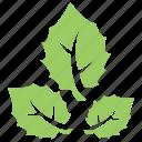 american aspen, bigtooth aspen leaves, large-tooth aspen, populus grandidentata, white poplar icon