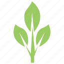 foliage, grey willow leaves, grey willow twig, leafy twig, small plant icon