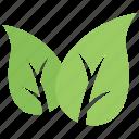 eco green, eco leafs, green leaf, leaf design, leaf shape icon