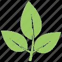 elm leaves, green leaf, leaf, leaf design, leaf shape icon