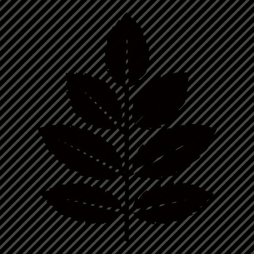 ash, foliage, leaf, leaves, spear, tree icon