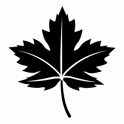 leaf, leaves, maple, sycamore, tree icon