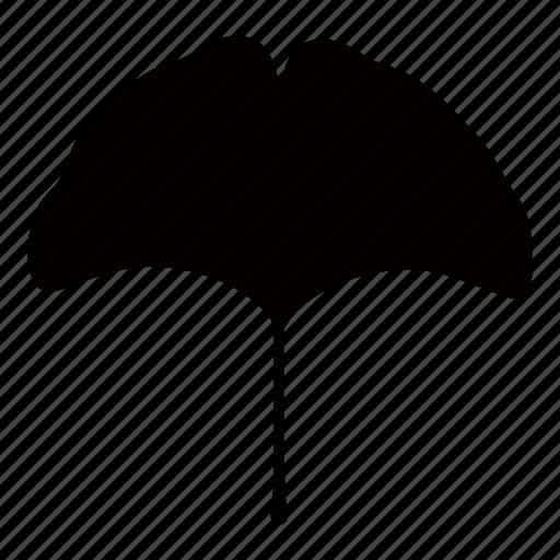 botany, ginkgo, japan, korea, leaf, maidenhair, tree icon