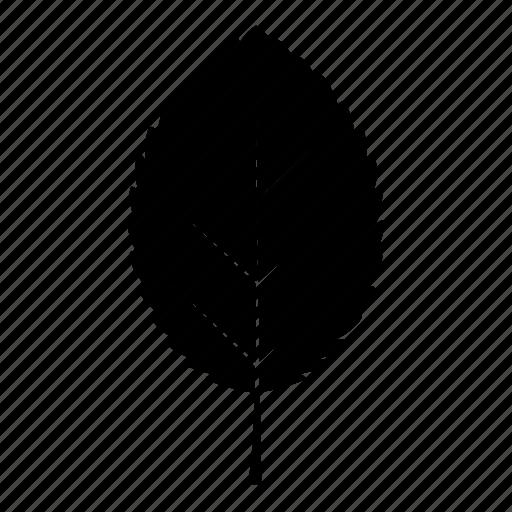 alder, leaf, leaves, tree icon