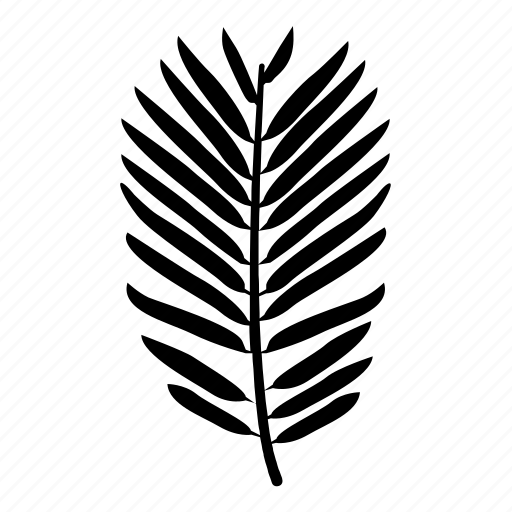 conifer, foliage, frond, leaf, pine, yew icon