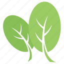 cashew leaves, green leaves, oblong leaves, obovate leaves, spatulate leaves icon