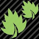 broadleaf grass, foliage, green leaf, greenery, leaf grass icon