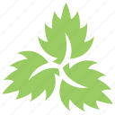 divided leaf, green leaves, leaf logo, three leaves, veppilai leaves icon