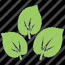 green leaves, leaf design, leaves, milkweed leaves, wild leaves icon