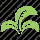 divided leaf, green leaves, leaf logo, three leaves, tripartite leaf icon