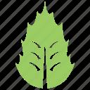 foliage, green leaf, holly leaf, leaf, mistletoe leaf icon