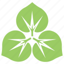 divided leaves, green leaves, large-leaved lime, leaf flower, tilia platyphyllos leaves icon