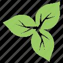 divided leaves, green leaves, leaf flower, milkweed leaves, wild leaves icon