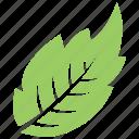 green leaf, leaf, serrated leaf, toothed leaf, veppilai leaf icon