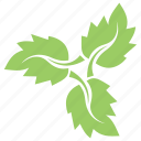 foliage, green leaf, leaf design, leaf flower, leaves, strawberry leaves icon