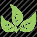 divided leaves, green leaves, leaf logo, three leaves, tripartite leaves icon