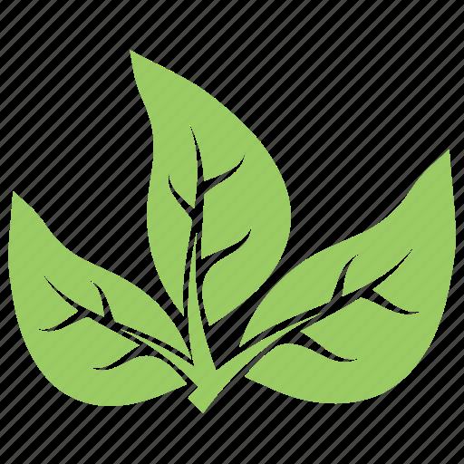 Three Leaves Green Leaves Leaf Logo Divided Leaves Tripartite Leaves Icon