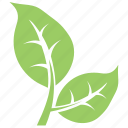 bipartite leaf, divided leaf, eco leaves, green leaves, two leaves icon