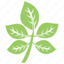 compound leaves, foliage, leaves, small plant, tree branch icon