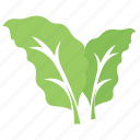 bolleana poplar leaves, foliage, green leaves, leaves, tree leaf icon