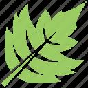 green leaf, hawthorn leaf, leaf, leaf design, leaf shape icon