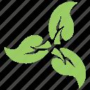 floral, flowery design, green leaf flower, leafy flower, swirl leaves icon
