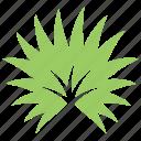 fan palm, palm leaf, palm sunday leaf, palmetto leaf, tropical leaf icon